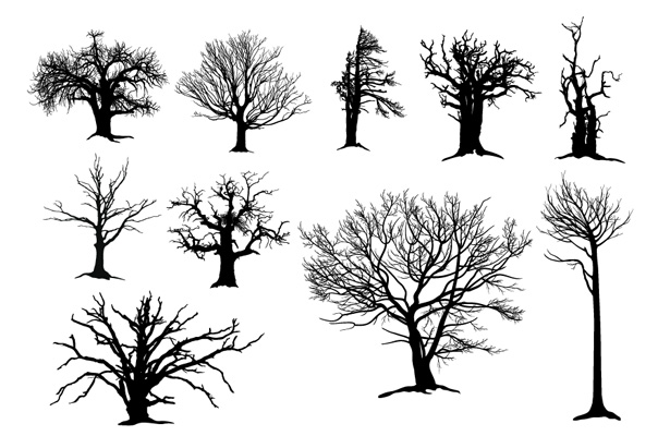 Dead Tree Drawings How to Draw a Leafless Tree